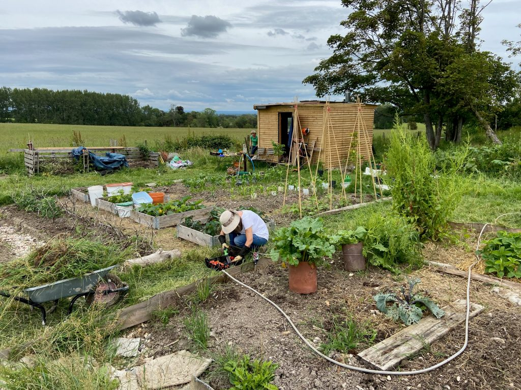 An allotment, with one person working
